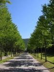 日本へそ公園(並木02)